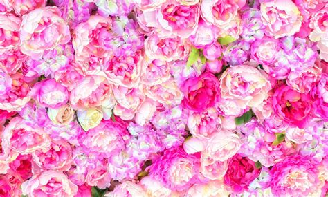 Flower Background Beautiful Background Of Artificial Pink Peonies Wedding