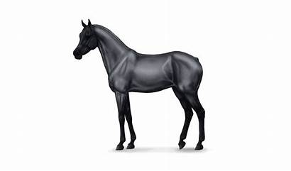 Horse Noble Champion Horses