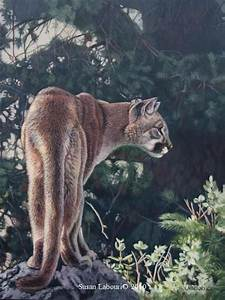 Mountain lion - puma - cougar - Original Paintings by ...