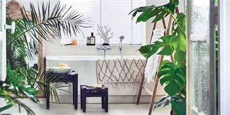 quelle plante pour une chambre quelles plantes pour une salle de bains