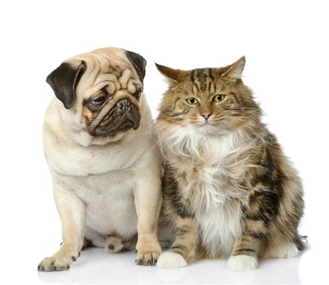 Cat And Dog Cats And Dogs Can They Be Happy Roommates