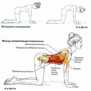 Упражнение березка при геморрое