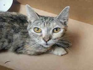 URGENT CATS - NEED HELP ASAP!!! | Facebook