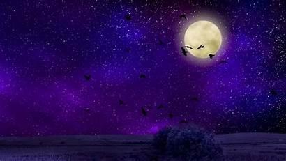 Moon Sky Night Moonlight Birds Wallpapers Desktop