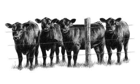 steers clipart   cliparts  images