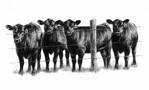 Show cattle clip art - Clip Art Library