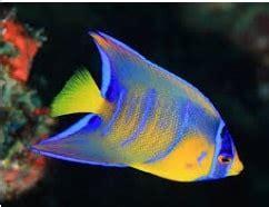 types  small ocean fish characteristics