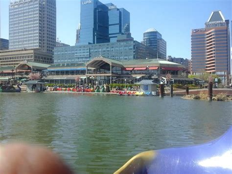 Paddle Boats Harbor by Views From The Boat Picture Of Inner Harbor Paddle Boats