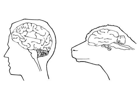 Hersenen Kleurplaat by Kleurplaat Hersenen Mens En Schaap Afb 18998 Images