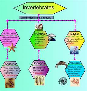 Nos Encanta Aprender      My Invertebrates Diagram  Year 4
