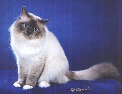 kaķi - Spoki - bildes 2