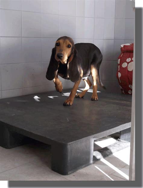 Pedana Per Cani by Pedane Per Canili Home Page