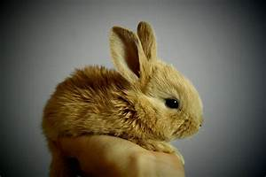Small, Furry, Pet, Care, During, Covid-19