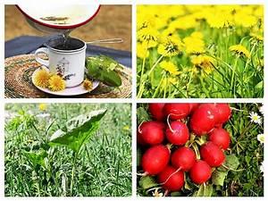 Plante Detoxifiante : plante detoxifiere la taifas ~ Melissatoandfro.com Idées de Décoration