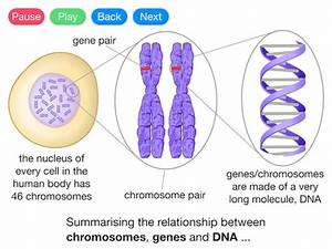 Genes  Dna And Chromosomes  Video