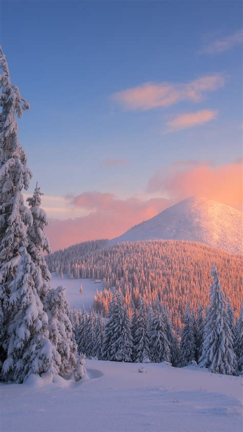 wallpaper carpathian mountains snow winter sunset pine trees  nature  wallpaper