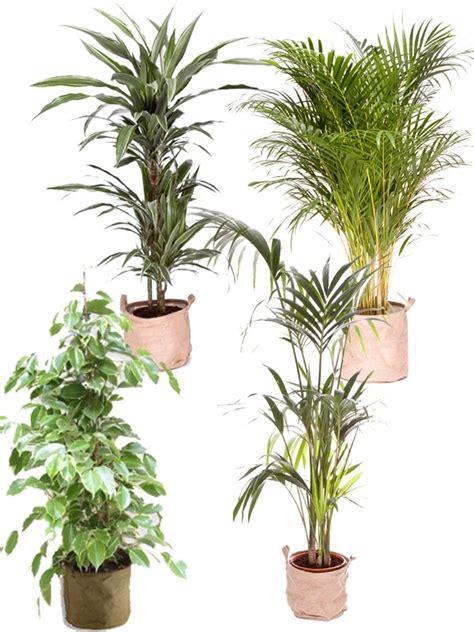 pack 4 grandes plantes vertes d 233 polluantes d int 233 rieur