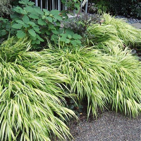 ornamental grass landscape ornamental grasses in the landscape