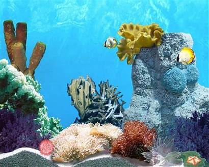 Fish Animated Tropic Malware Clean Report