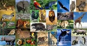 10 Facts about Animalia | Fact File