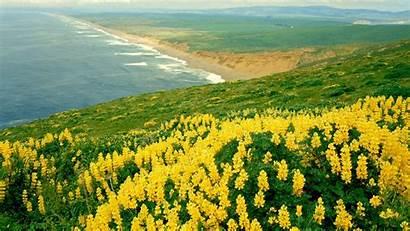 Yellow Flowers Sea Ocean Flower Wallpapers