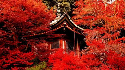 full hd wallpaper kyoto autumn tea house desktop