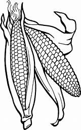 Corn Coloring Transparent Clipart Clip Pinclipart Stalks sketch template
