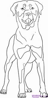 Rottweiler Dog Coloring Drawings Pages Animal Draw Step Should Drawing Come Colors Outline Easy Puppy Dogs Breed Sketch Steps Markings sketch template