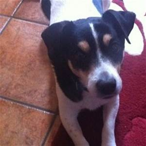Lost Dog on 29 Apr 2013 in Clontarf/killester/donnycarney ...