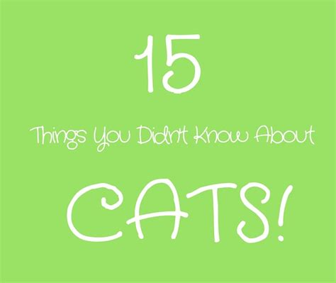 15 things you didn 39 t know about cats karma cat zen dog