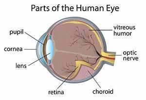 Diabetes And Your Eyes  U2014 More Than Retinopathy