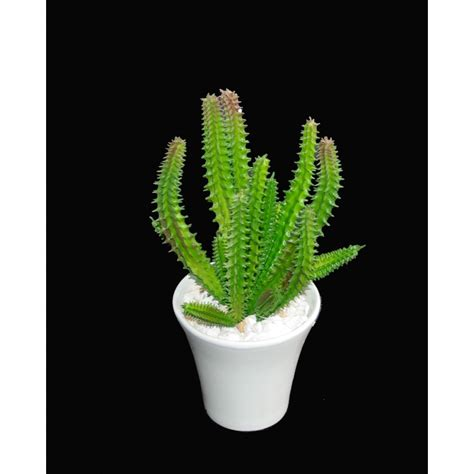 cactus artificiel en pot 18 cm cactus plantes grasses artificiels reflets nature lyon