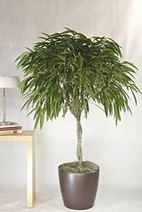 Zimmerpflanzen Alte Sorten : 12 pflegeleichte zimmerpflanzen die am besten giftige ~ Michelbontemps.com Haus und Dekorationen