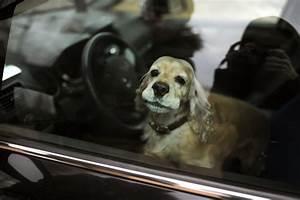 Voiture Hs Que Faire : chien enferm dans une voiture en hiver ~ Gottalentnigeria.com Avis de Voitures