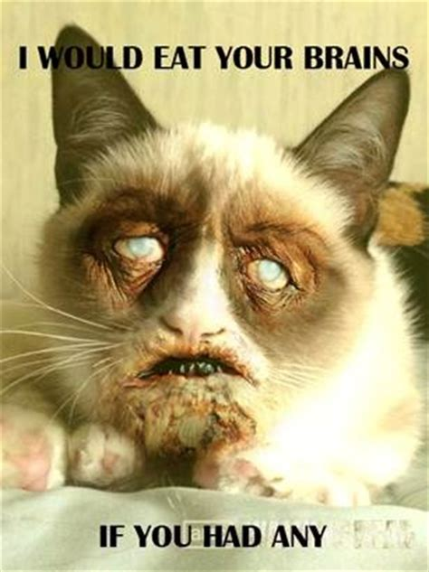 17 Best Images About Grumpy Cat And Zombies On Pinterest
