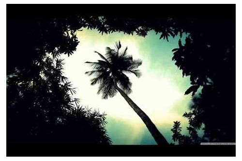 Palm trees flatbush zombies download.