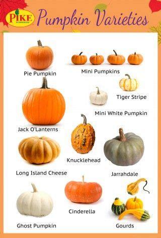 pumpkin species clipart   cliparts  images