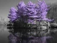 foto de 215 best Beautiful trees images on Pinterest Blue green