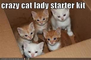 cat starter kit cat starter kit