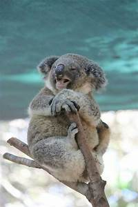 Pin by Lisa O`Brien on Lovely Animals   Pinterest   The o ...