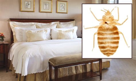 Bed Bugs Nyc by Reports Of Bed Bugs Increased By 44 In New York City