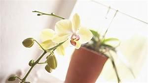 Blumen Für Fensterbank : fensterbank dekorativ gestalten ~ Markanthonyermac.com Haus und Dekorationen