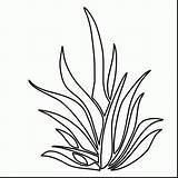 Coloring Plants Plant Seaweed Drawing Sea Grass Underwater Aquatic Ocean Shrubs Kelp Clipart Colouring Printable Draw Seagrass Aquarium Getdrawings Clipartmag sketch template