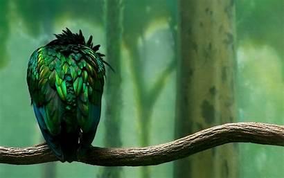 Birds Wallpapers Desktop S1