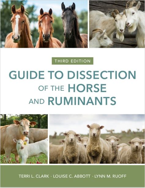 horse dissection ruminants guide ruminant