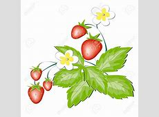 Strawberry flower clipart Clipground