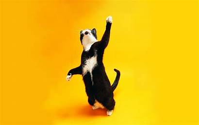 Cats Dancing Funny Wallpapers Cat Animals Funky