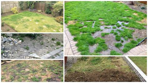 Garden Solutions what to do with patchy grass garden solutions