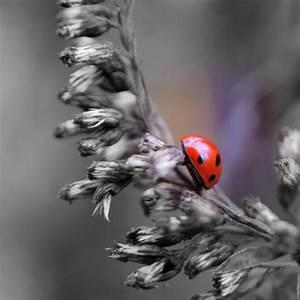 Herbst Schwarz Weiß : roter wanderfleck natur view fotocommunity ~ Orissabook.com Haus und Dekorationen