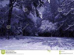 Winter night landscape stock image. Image of frost, night ...